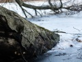 Lanker See bei Preetz Februar 21